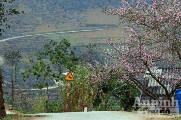 Trải nghiệm cung bậc mùa xuân vùng đá núi ảnh 7