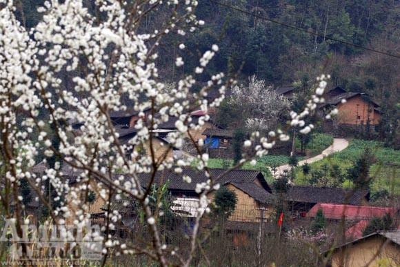 Trải nghiệm cung bậc mùa xuân vùng đá núi ảnh 10