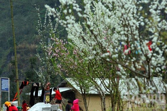 Trải nghiệm cung bậc mùa xuân vùng đá núi ảnh 13
