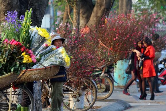 Ngoài phố, hoa đang gọi Tết ùa về ảnh 5