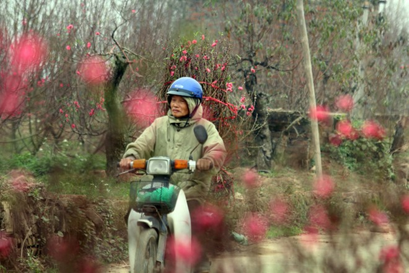 Ngoài phố, hoa đang gọi Tết ùa về ảnh 10