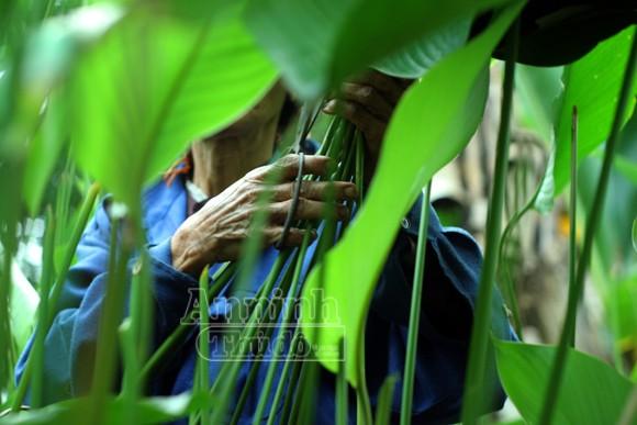 """Lạc vào vườn """"vỏ của những chiếc bánh chưng xanh"""" ảnh 1"""