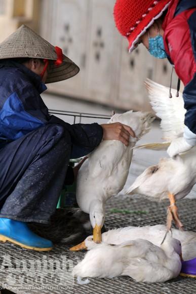 Lo lắng dịch cúm gia cầm, chợ Hà Vĩ đìu hiu, ế ẩm ảnh 6