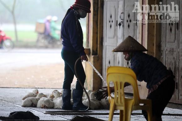 Lo lắng dịch cúm gia cầm, chợ Hà Vĩ đìu hiu, ế ẩm ảnh 8