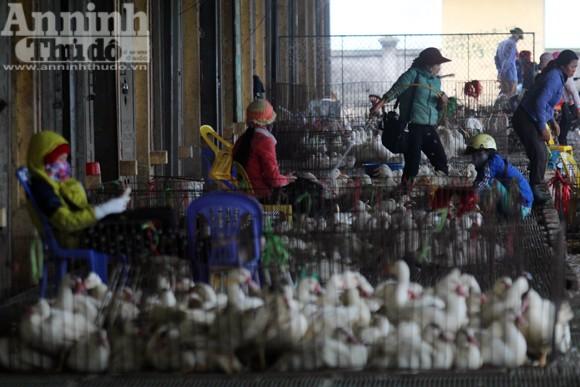 Lo lắng dịch cúm gia cầm, chợ Hà Vĩ đìu hiu, ế ẩm ảnh 9