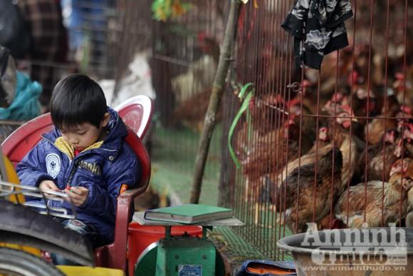 Lo lắng dịch cúm gia cầm, chợ Hà Vĩ đìu hiu, ế ẩm ảnh 10