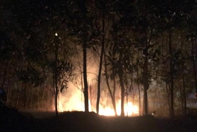 Cảnh báo tình trạng sử dụng lửa gây cháy cây xanh tại đại lộ Thăng Long và đường Võ Văn Kiệt ảnh 1