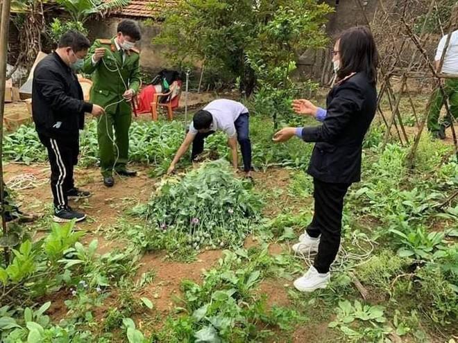 Phát hiện khoảng 3.000 cây cần sa trong vườn nhà người dân ảnh 2