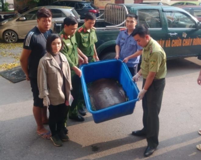 Xử lý đối tượng buôn bán cá thể rùa quý hiếm nặng 22kg ảnh 1