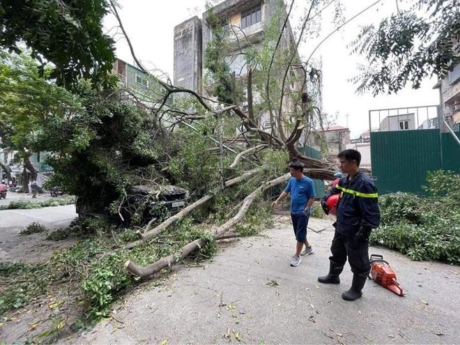 Cứu hộ vụ cây xanh đổ trúng ô tô đang lưu thông trên phố ảnh 1