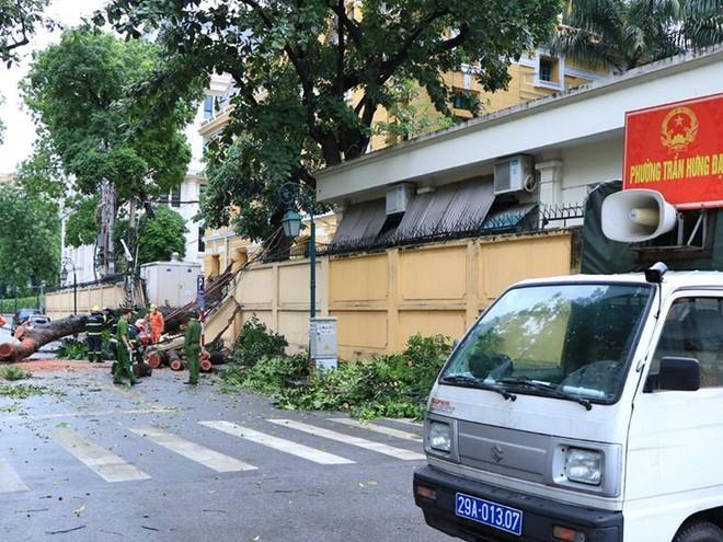 Lực lượng cứu nạn khẩn trương khắc phục sự cố cây đổ trên phố Hoả Lò ảnh 2