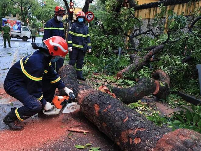 Lực lượng cứu nạn khẩn trương khắc phục sự cố cây đổ trên phố Hoả Lò ảnh 1