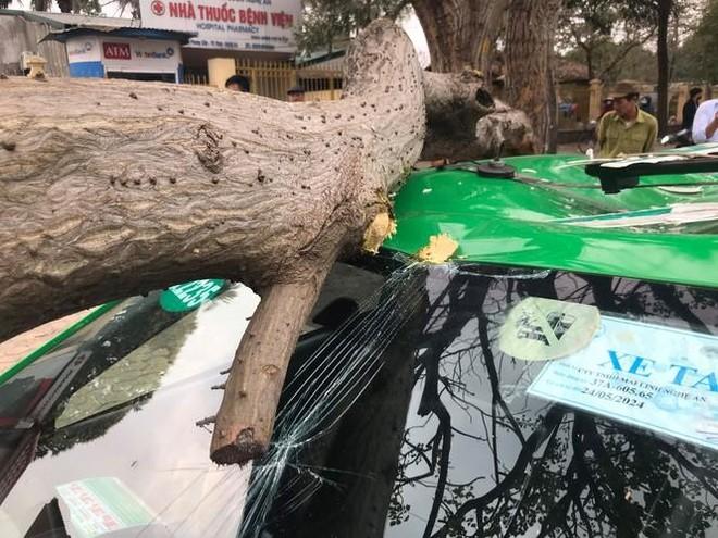 Cành cây gãy đè bẹp nóc xe taxi ảnh 2
