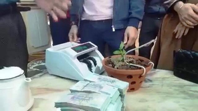 Xôn xao clip chuyển nhượng cây hoa lan đột biến 1,65 tỷ đồng ở Nghệ An ảnh 1