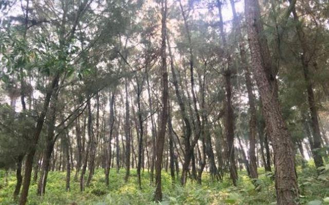 Người đàn ông tử vong trong rừng thông với vết thương trên cổ và bụng ảnh 1