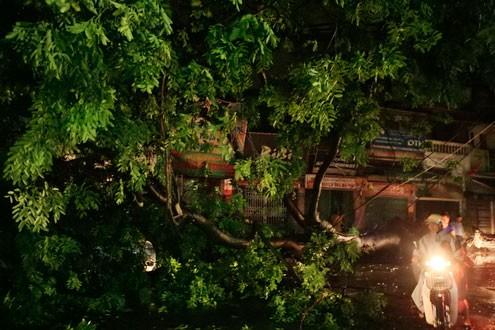 Lốc xoáy quật đổ cây cổ thụ ảnh 1
