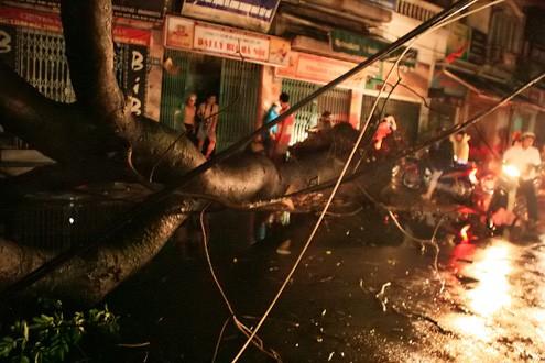 Lốc xoáy quật đổ cây cổ thụ