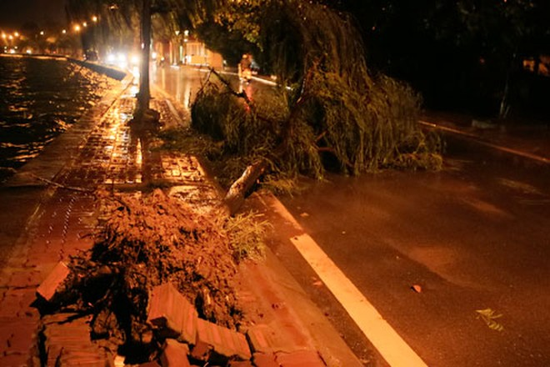 Lốc xoáy quật đổ cây cổ thụ ảnh 5