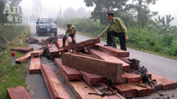 Phát hiện 46 phách gỗ lậu dưới chân đèo ảnh 1