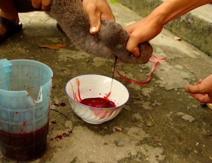 Thực hư chuyện cúng tế thần rắn bằng tiết canh... chuột ảnh 7