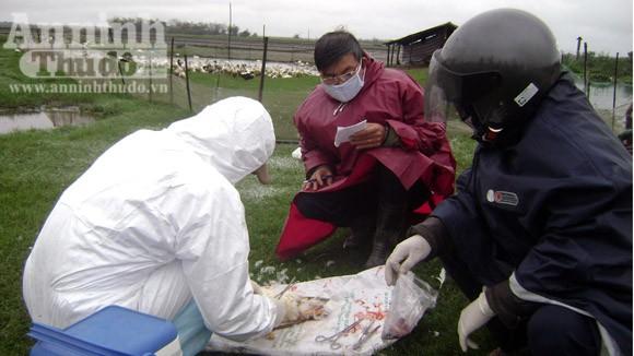 Quảng Trị: Khẩn trương khống chế dịch cúm gia cầm ảnh 2