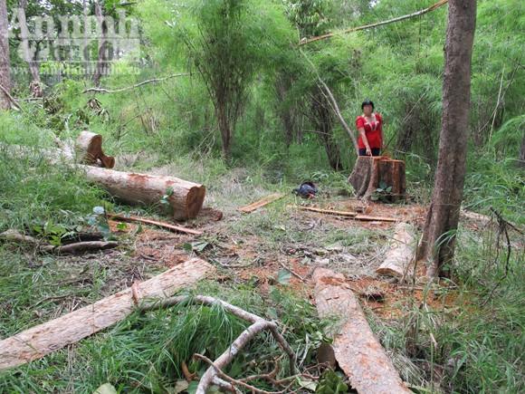 """Vườn quốc gia Yok Đôn: Rừng vẫn """"chảy máu"""" ảnh 4"""
