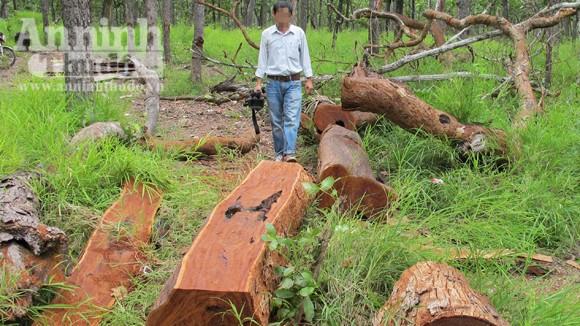 """Vườn quốc gia Yok Đôn: Rừng vẫn """"chảy máu"""" ảnh 1"""