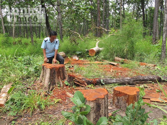 """Vườn quốc gia Yok Đôn: Rừng vẫn """"chảy máu"""" ảnh 3"""