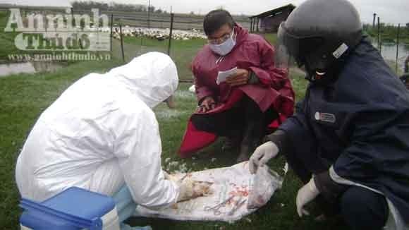 Khẩn trương khống chế dịch cúm gia cầm ảnh 1