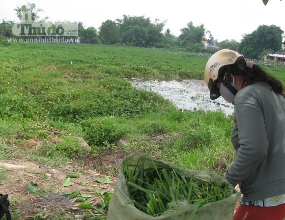 Cá chết, đồng ruộng bỏ hoang vì nguồn nước ỗ nhiễm ảnh 3