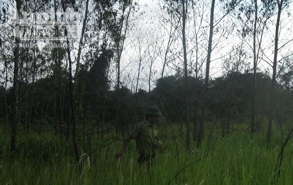 """Cam go """"cuộc chiến"""" giữ rừng ở Khu bảo tồn thiên nhiên Ea Sô! (1) ảnh 2"""