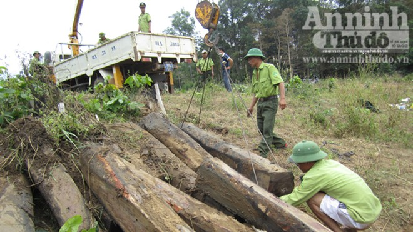 Phát hiện gần 9 m3 gỗ lậu trong Vườn quốc gia Yok Đôn ảnh 1