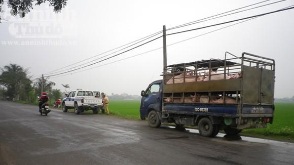 Phát hiện vụ mổ lợn chết ngay bên đường quốc lộ ảnh 1