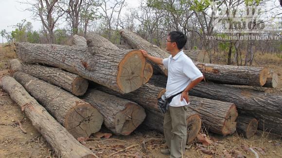 Vườn quốc gia Yok Đôn: Phát hiện hơn 148m3 gỗ không rõ nguồn gốc ảnh 1