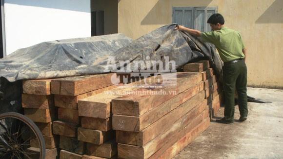 Tước giấy phép lái xe 6 tháng vì vận chuyển gỗ lậu ảnh 1