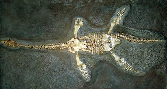 Quái vật hồ Loch Ness: Huyền thoại, sự thật, hay là trò câu khách? ảnh 3