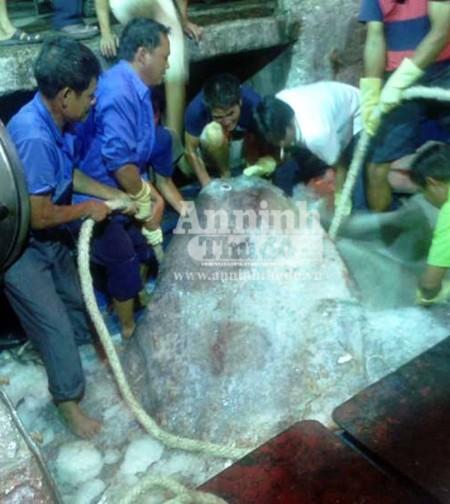 """Ngư dân Nghệ An bắt được cá mặt trăng """"khủng"""" ảnh 2"""