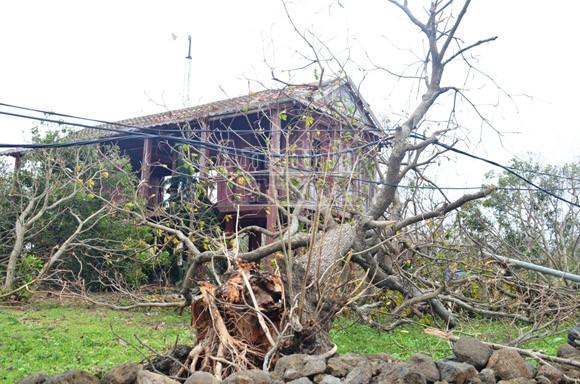 Đảo Cồn Cỏ tan hoang sau bão, cần hỗ trợ khẩn cấp ảnh 6