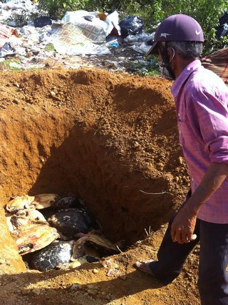 Móc hố chôn tiêu hủy, lấy trộm 94 cá thể rùa quý hiếm ảnh 1