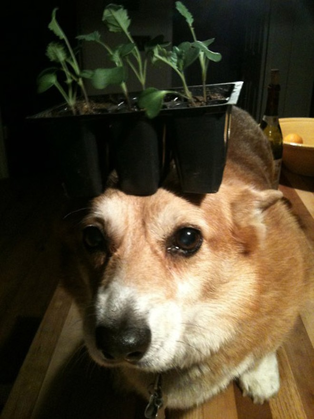 Thú vị chú chó có thể giữ thăng bằng mọi vật trên đầu ảnh 7