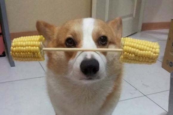 Thú vị chú chó có thể giữ thăng bằng mọi vật trên đầu ảnh 2