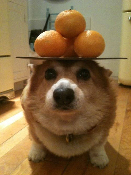 Thú vị chú chó có thể giữ thăng bằng mọi vật trên đầu ảnh 4