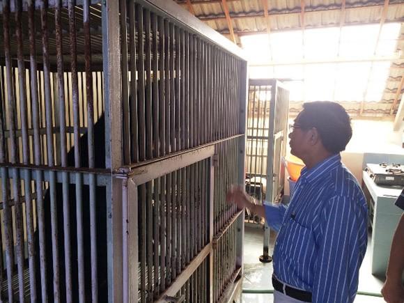 Bình Thuận xóa bỏ hoàn toàn nạn nuôi gấu trang trại ảnh 1