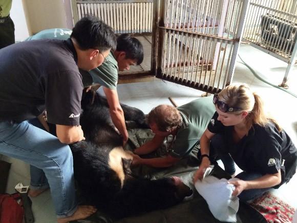 Bình Thuận xóa bỏ hoàn toàn nạn nuôi gấu trang trại ảnh 2