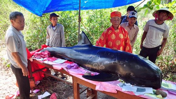 Chịu lỗ hàng chục triệu đồng, đưa cá voi 5 tấn về đất liền an táng ảnh 1