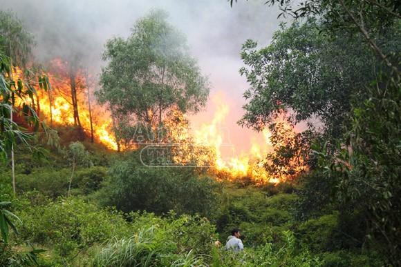 Cháy rừng kéo dài, 500 người tham gia dập lửa ảnh 1