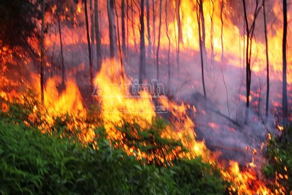 Cháy rừng kéo dài, 500 người tham gia dập lửa ảnh 2