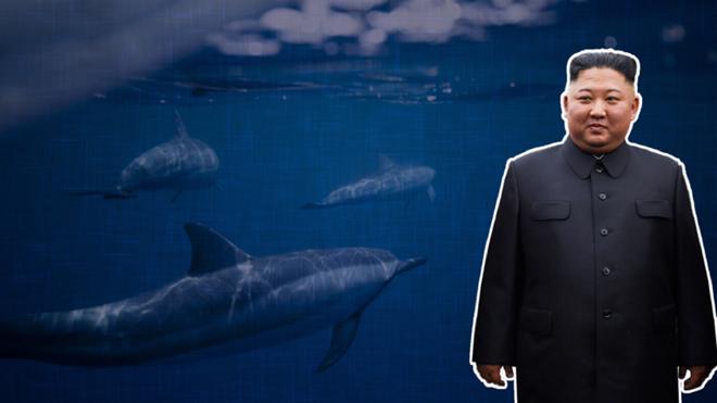Triều Tiên đang huấn luyện cá heo cho mục đích quân sự? ảnh 2