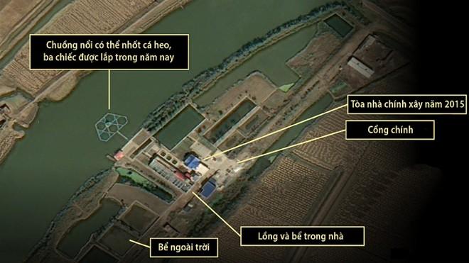 Triều Tiên đang huấn luyện cá heo cho mục đích quân sự? ảnh 1