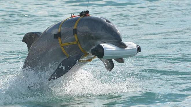 Triều Tiên đang huấn luyện cá heo cho mục đích quân sự? ảnh 3
